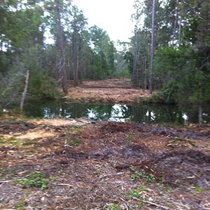 Land Clearing Near Me